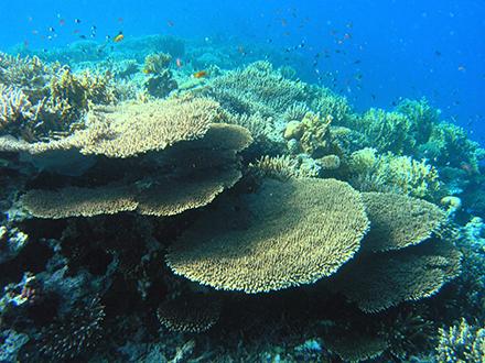 Terumbu karang yang indah