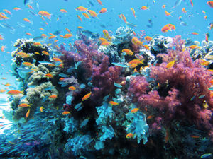Taman laut terumbu karang